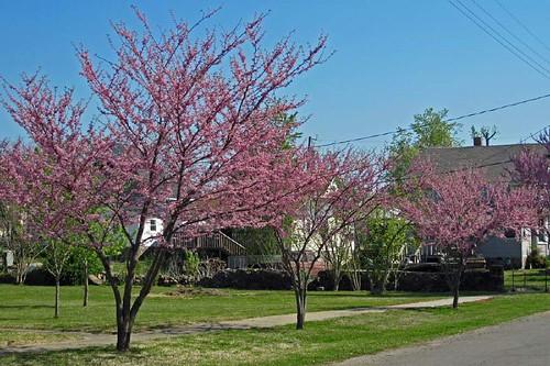 Spring In Mena 26