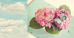 Love (Kimberly Chorney) Tags: pink flowers texture butterfly pretty naturallight bluesky hazey dippy thingsilove fluffyclouds dyptch pastal twofortuesday pinkhydrangeas tealbench