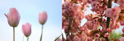 {19} carnation pink