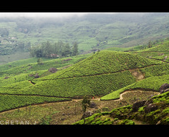 Chill Factory  - Munnar (Jchetan) Tags: trip india landscape asia kerala munnar godsowncountry indianlandscapes chetanj honeymoonspot placestovisitinkerala suthindia asispacific southindianlandscapes