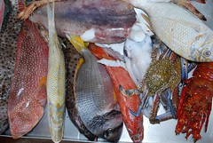 Lunch (szomkat) Tags: red sea holiday fish lunch dahab dive egypt el hal sheikh sharm egyiptom vrstenger languszta