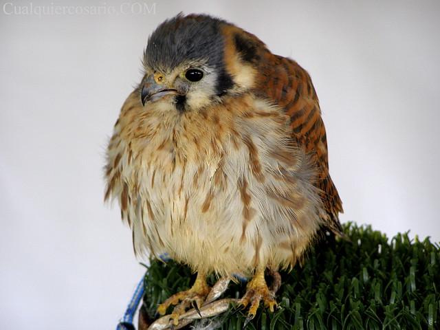 Aves extraordinarias VIII
