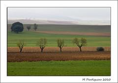 Almendros y encina (M Perdiguero) Tags: raw paisaje campo niebla lamancha albacete canon70200f4l almendros castillalamancha canon400d ptrola cerealesnublado