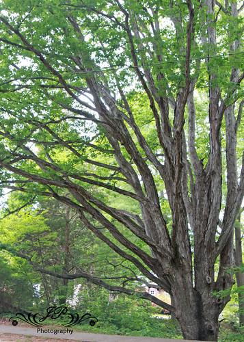 Tree  4-23-10
