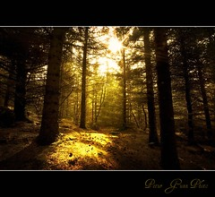 A burst of light (Ptur Gunn Photograpphy) Tags: wood trees light tree me grass sunshine silhouette yellow dark photo iceland woods shine little sony gras burst alpha 700 sland petur gunn tr skjuhl ptur sl gult gunnarsson skgar skgur digitalcameraclub mr slarljs 100commentgroup