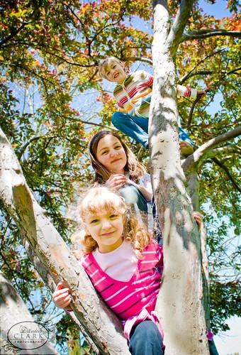 127/365 - Monkeys in a Tree