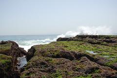 tidepool18 (timwinter79) Tags: range tidepools tidepool tidal sanpedrotidepools