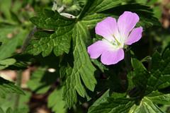 wildflowers 032