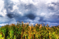 Grass and sky (Theophilos) Tags: sky nature grass clouds greece    prespes
