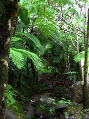El Yunque, Puerto Rico (BHagen) Tags: rainforest puertorico tropical elyunque