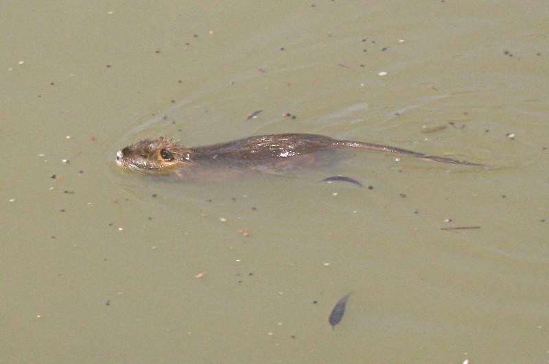 08-05-2010-rat2