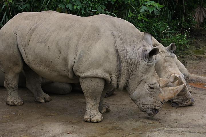 台北木柵動物園0049