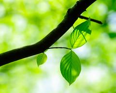 [フリー画像] 花・植物, 葉っぱ, グリーン, 201005110900