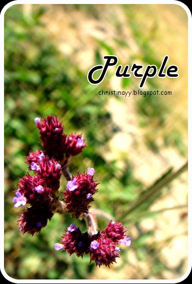 Stanthorpe: Purple Flower