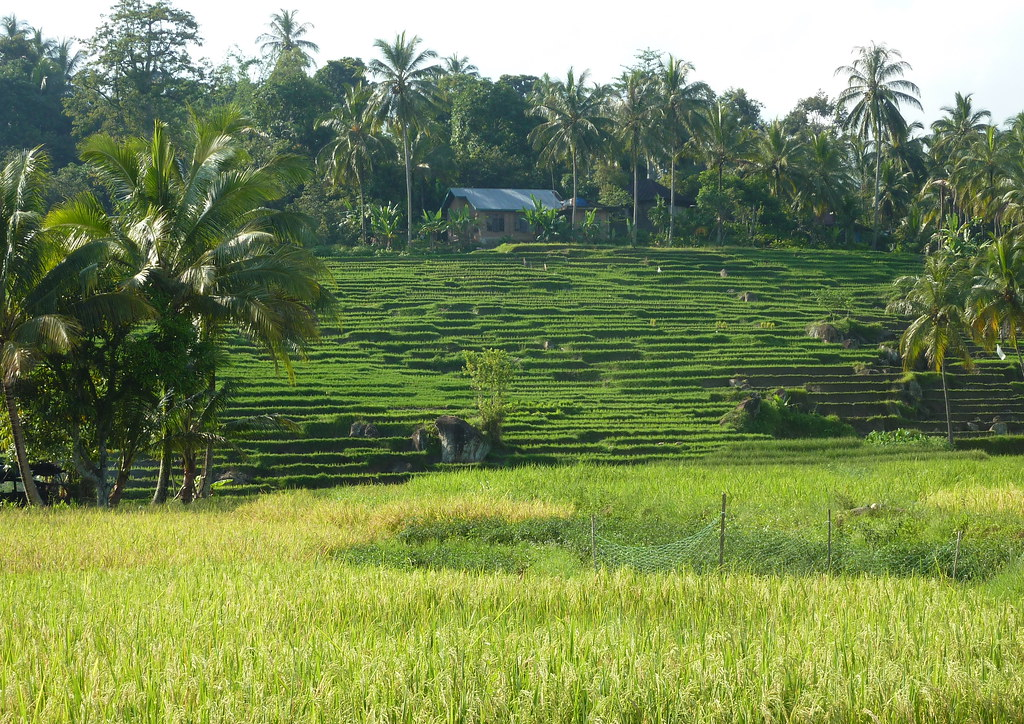 Sumatra-Bukittinggi (228)