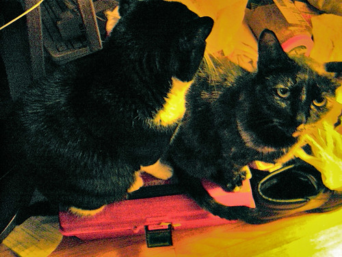 Two Cat Toolbox