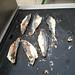 Frying mackerel