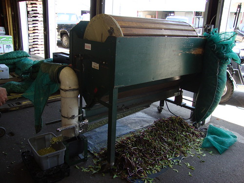 Shelling Peas, Farmer's Market, Birmingham AL
