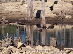 Trunk reflections. (di off the wallaby) Tags: rock reflections earth australia tasmania trunks derby the4elements cascadedam