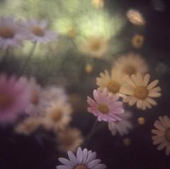 kichijouji . tokyo . Japan (satoshi  denuclearization) Tags: flower searchthebest deepavali swp blueribbonwinner idream platinumheartaward fabulousphoto awesomeblossoms saariysqualitypictures sublimemasterpiece fotografaglobal artistictreasurechest capturethefinest redmatrix imagicland ofpetalsandflowersgroup cedruseternum phoeniximmortal healinglightofthespirit lightartmasterpiece