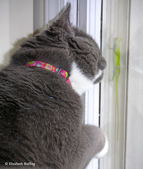 Kitty makes friends with an anole