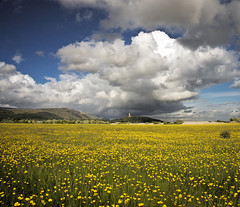 Summer in Scotland (Stuart Stevenson) Tags: blue summer sun white rain yellow clouds scotland bright stirling scottish fragrant williamwallace buttercups ochilhills nationalwallacemonument canon5dmkii ©stuartstevenson amazingfragrence wishedflickrdidscratchandsniff