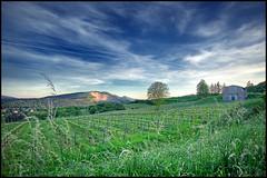 vineyards vienna liesing hdr