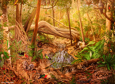 Sea Acres Rainforest Nature Reserve - Rainforest Mural (Black Diamond Images) Tags: nature rainforest mural australia nsw portmacquarie australianbirds australiananimals seaacres australiannativeplant rainforests bdi australiannativeplants midnorthcoast australianplants tertius rainforestflora rainforestplants rainforestfauna rainforestplant australianrainforest arfp jodavidson australianrainforests blackdiamondimages australianrainforestplant australianrainforestplants seaacresnaturereserve rainforestmural australianrainforestspecies nswrfp australianrainforesteducation seaacresrainforestnaturereserve subtropicalaustralianrainforest australianrainforestfloraandfauna rainforestfloraandfauna nswrainforestflora nswrainforestfauna photosseaacres sanrpmarfp rainforestmurals seaacresnationalpark sanppm