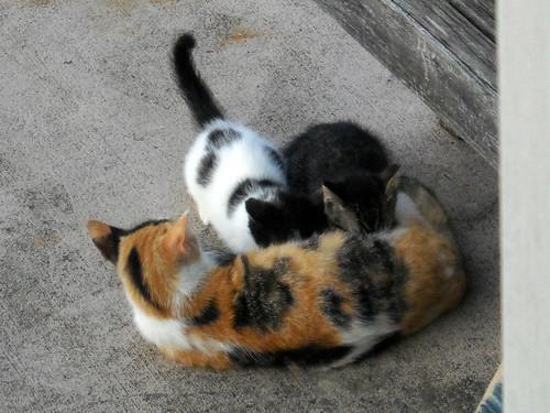 Mammiferi - Differenza tra mammiferi e rettili