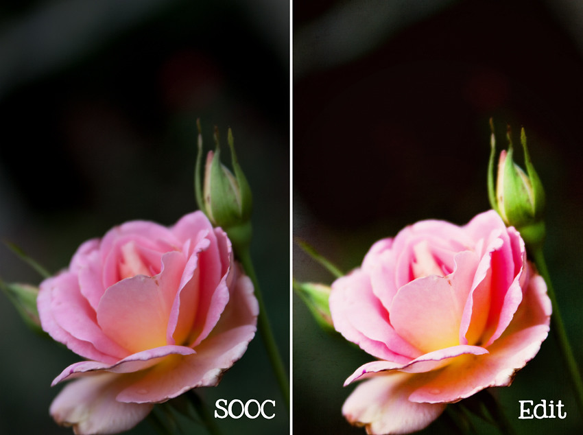 Rose Garden Before and After