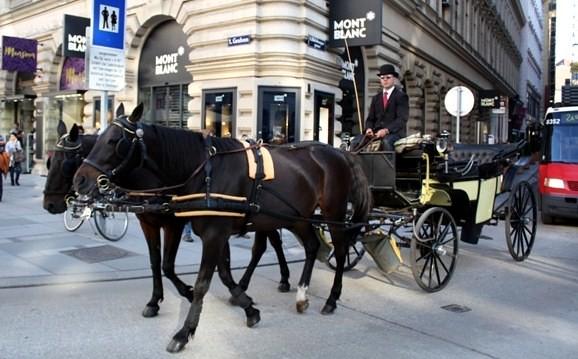 Vienna 9 - hourses