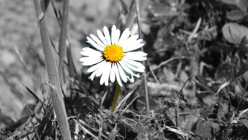 daisy-altered