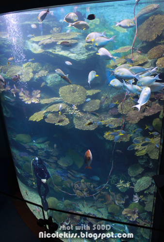 aquarium with diver 2