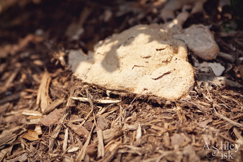 Dirt + Fungus