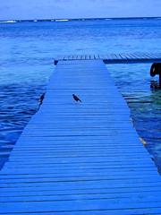 ponton bleu moorea (SABCHA) Tags: ocean mer bleu tahiti plage oiseau couleur ponton moorea voyages pacifique franaise paradisiaque polynesie