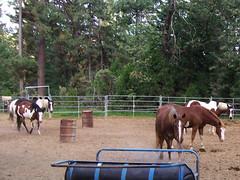 Skylake Horses