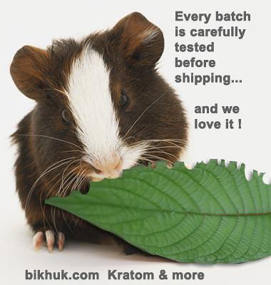 Kratom  bikhuk guinea pig kratom test picture photo bild