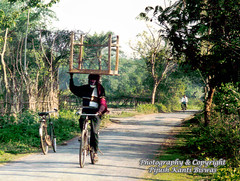 STYLE - 1 ...AN EASY WAY TO CARRY A TABLE (PIJUSH KANTI BISWAS) Tags: india table pb cycle balance carry candidphotography abigfave