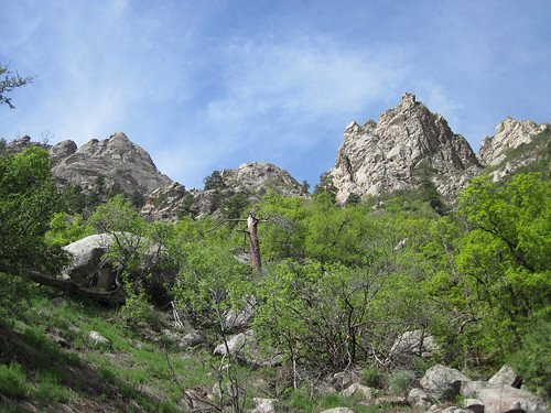 Organ Mountains Trees