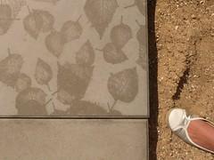 scaling concrete leaves (tsaaby) Tags: architecture frederiksberg arkitektur landscapearchitecture landskab urbanspace byrum witraz witrazarkitekter finsenshave