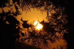 Contraluz (E.M.Lpez) Tags: sol contraluz atardecer fiesta pueblo puestadesol ramas castillodelocubn