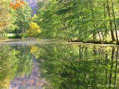 Beauté (Domi Rolland ) Tags: france nature automne europe rivière feuille aveyron rodez midipyrénées layoule