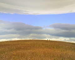 rule of thirds (calguru) Tags: sky calgary grass clouds nw alberta nosehill ilikegrass bendingistherule