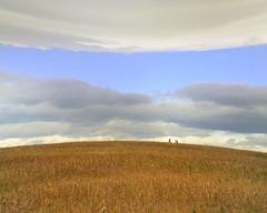rule of thirds (calguru) Tags: sky calgary grass clouds nw alberta nosehill ilikegrass bendingistherule
