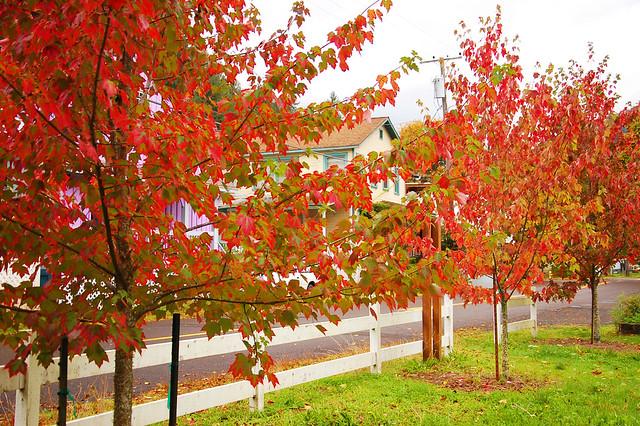Maple row