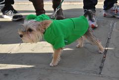 Ribbit (thoth1618) Tags: nyc newyorkcity costumes dog pet pets ny newyork halloween animal animals brooklyn costume october brooklynheights brooklynheightspromenade parade promenade gothamist halloweenparade 2010 howloween brooklynpromenade brooklynny dogparade dogcostumes dogcostume dogincostume brooklynusa muttsquerade petsincostume dogincostumes brooklynheightsblog 103010 petincostume animalsincostumes animalincostume halloween2010 october302010 perfectpawsinc the8thannualhowloweenmuttsqueradeparade