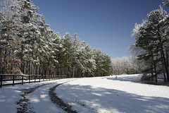 Snow Path (Harris Clayton) Tags: blue trees winter shadow sunlight white snow black cold green ice beautiful field pine fence snowman day path clayton tracks harris trial pinetrees regionwide harrisclayton