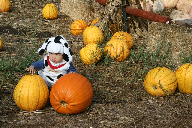 a cutie at the pumpkin patch