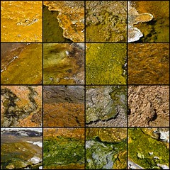 The Colors of Yellowstone (Jill Clardy) Tags: park west green bronze gold fdsflickrtoys rust mosaic basin national pools 100views copper thumb yellowstone wyoming geothermal thermal 4000 glistening 5014 4001 5017 thermophiles 5040 5029 4005 5041 5011 5008 5015 geyse 4999 5012 5009 5010 5016 5024 5025