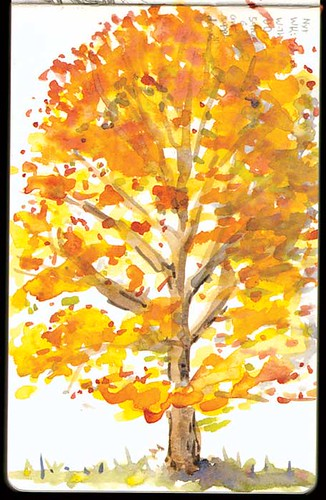 w_2010-11-04_autumn-tree